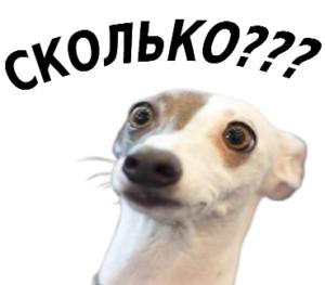 судебный приказ мирового судьи удивил собаку